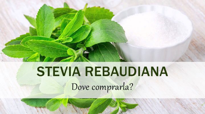 Stevia il dolcificante naturale dove si compra erbe for Stevia pianta